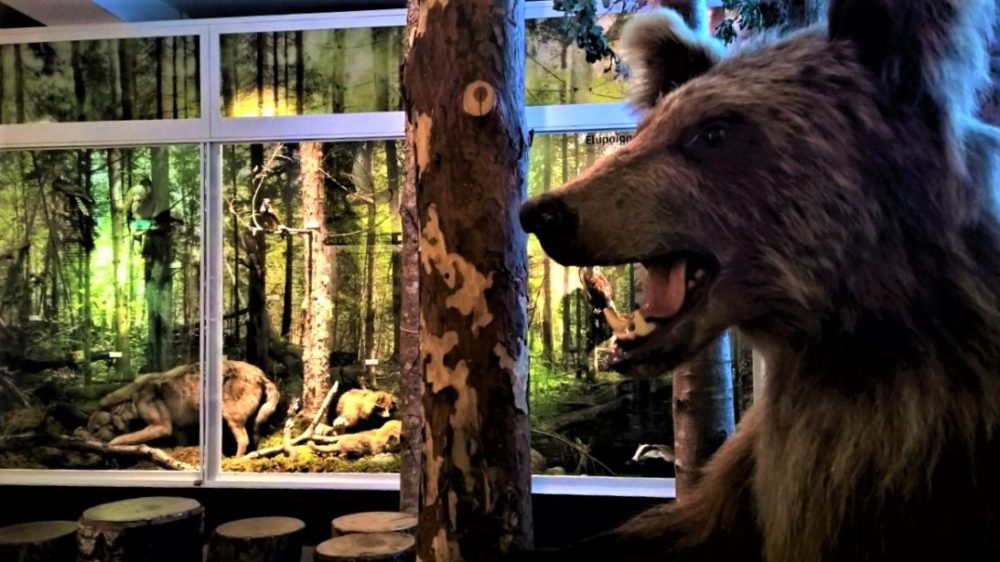 Museum of Natural History in Tallinn_2